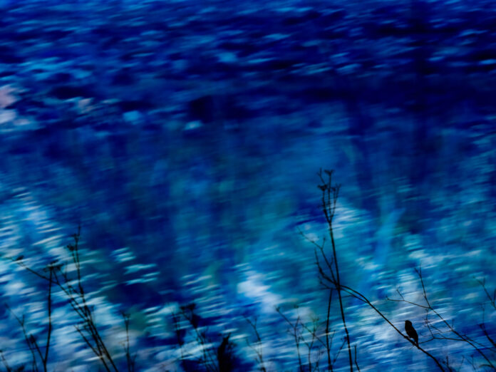 Blue bird | Fine art Photography